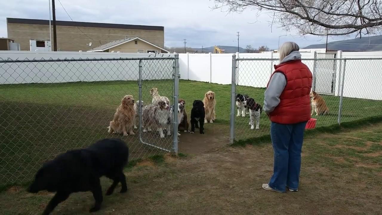 Dogs Barking Through Open Gate