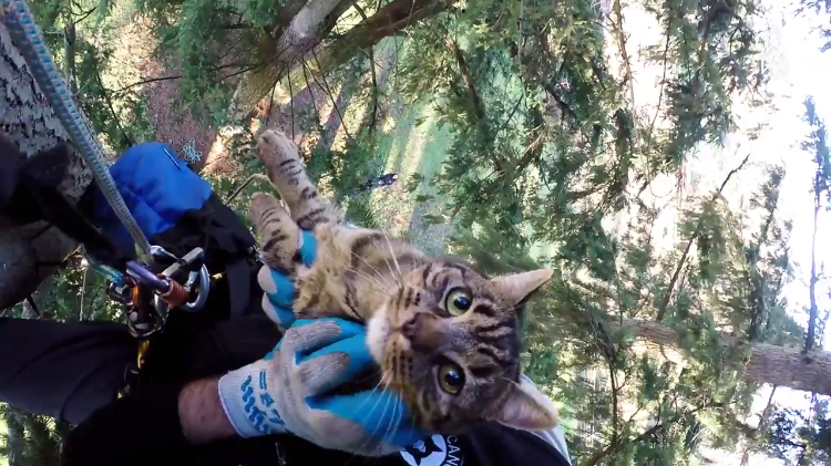 compassionate arborist brothers in law who rescue cats from tall
