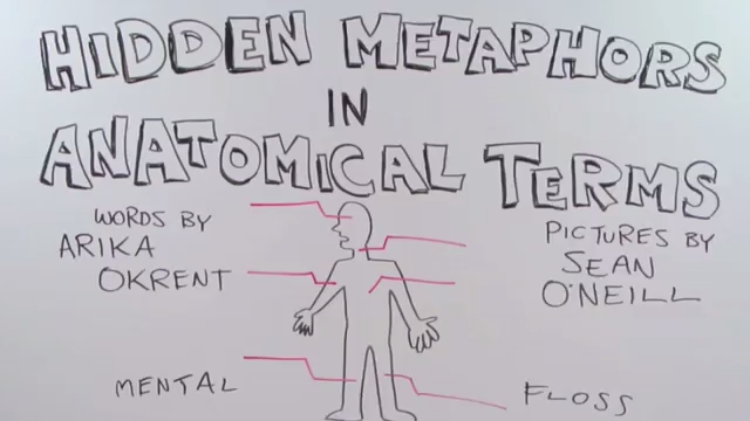 How Medical Terms For Parts Of The Human Anatomy Originated With