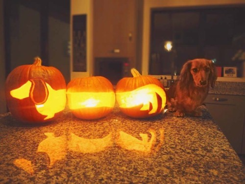 Happy Halloweiner Via R Aww Buzzfeed